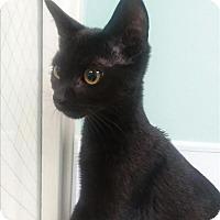 Adopt A Pet :: Magnum Pi - Portsmouth, VA