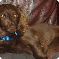 Adopt A Pet :: Hershey - Humble, TX