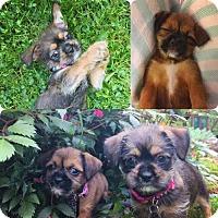 Adopt A Pet :: Daphne and Maddie - Shelburne, VT