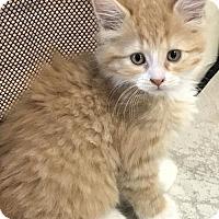 Adopt A Pet :: Effie - Philadelphia, PA