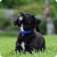Adopt A Pet :: Leroy - Bradenton, FL
