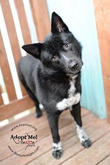 Akita Mix Dog for adoption in Liberty, Missouri - Gemma