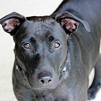 Adopt A Pet :: Brenna - Oviedo, FL
