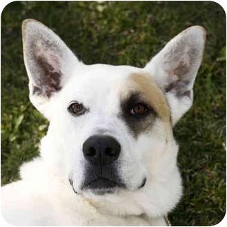 Labrador Retriever Mix Dog for adoption in San Clemente, California - MOLLY