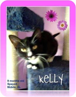 Domestic Shorthair Cat for adoption in Mobile, Alabama - Kelly