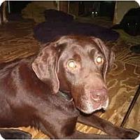 Adopt A Pet :: Cinnamon - North Jackson, OH