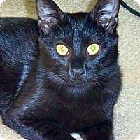 Adopt A Pet :: Muca - Green Bay, WI