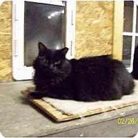 Adopt A Pet :: Mabel - Metairie, LA