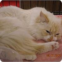 Adopt A Pet :: Beau - Riverside, RI