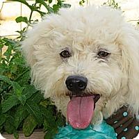 Adopt A Pet :: **Boomer** - Stockton, CA