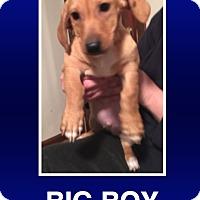 Adopt A Pet :: Claus - Morrisville, PA