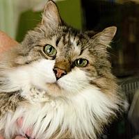 Adopt A Pet :: Matt - Eldora, IA