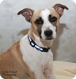 Terrier (Unknown Type, Medium) Mix Dog for adoption in Libertyville, Illinois - MikeyUPDATE