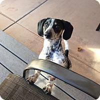 Adopt A Pet :: HARLEY - Hurricane, UT