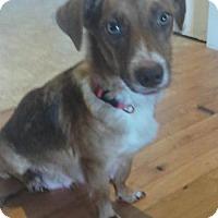 Adopt A Pet :: Mama Peanut - Blue Bell, PA