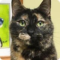 Adopt A Pet :: June - LaGrange Park, IL