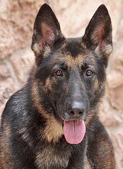 German Shepherd Dog Mix Dog for adoption in Los Angeles, California - Mia von Melusina