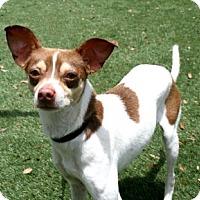 Adopt A Pet :: Possum - Bradenton, FL