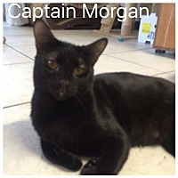 Adopt A Pet :: Captain Morgan - Satellite Beach, FL