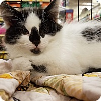 Adopt A Pet :: Diamond - Rosamond, CA