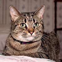 Adopt A Pet :: Wyeth - Tucson, AZ