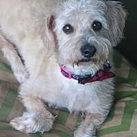 Terrier (Unknown Type, Small) Mix Dog for adoption in Woonsocket, Rhode Island - Tilda - needs a loving home