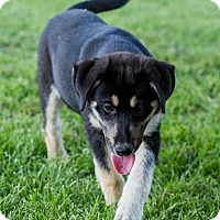 Adopt A Pet :: Hank - Whitewright, TX