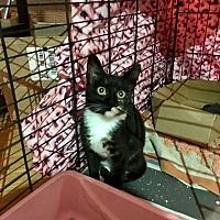 Adopt A Pet :: Mila - Wantagh, NY