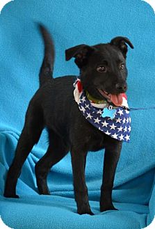 Labrador Retriever Mix Puppy for adoption in Minneapolis, Minnesota - Zeke