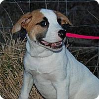 Adopt A Pet :: Taffy - Milford, CT
