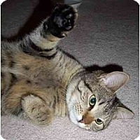 Adopt A Pet :: Timi - Richmond, VA