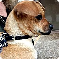 Adopt A Pet :: Millie - Kingwood, TX