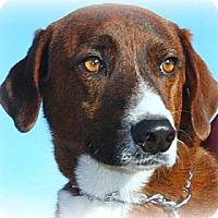 Adopt A Pet :: Merle - McKinney, TX