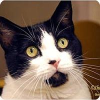 Adopt A Pet :: Darwin - Encinitas, CA