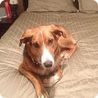 Adopt A Pet :: K y ~  ADOPTION PENDING - Toronto/Etobicoke/GTA, ON