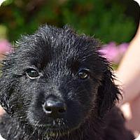 Adopt A Pet :: Kamilia - South Jersey, NJ