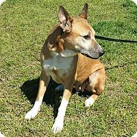 Adopt A Pet :: KIWI - Wilmington, NC