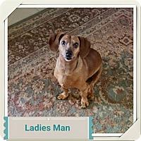 Adopt A Pet :: Quincy - Escondido, CA