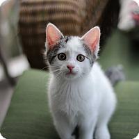 Adopt A Pet :: Music (The Musicians) - Richmond, VA