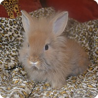 Adopt A Pet :: Bulda - 1 lb - Warwick, NY