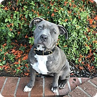 Adopt A Pet :: Greta - Mission Viejo, CA