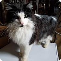 Adopt A Pet :: Berkley - McHenry, IL