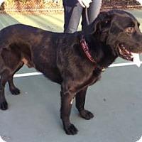 Adopt A Pet :: Mason - San Francisco, CA
