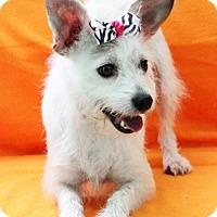 Adopt A Pet :: Shelby - Dalton, GA