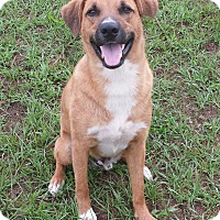 Adopt A Pet :: Mulligan - Orange Lake, FL