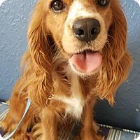 Adopt A Pet :: Nyla - Sugarland, TX