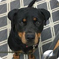 Adopt A Pet :: Rosco - Frederick, PA