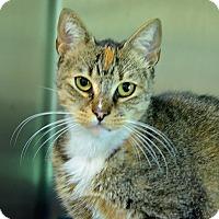 Adopt A Pet :: 10311392 - Brooksville, FL