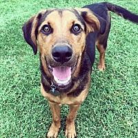Adopt A Pet :: Indy - Oklahoma City, OK
