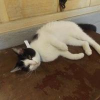 Adopt A Pet :: Patricia - Amory, MS